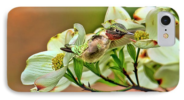 Hummingbird And Dogwood Blossoms IPhone Case