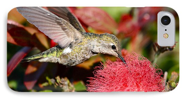 Hummingbird And Red Flower IPhone Case by Paul Marto