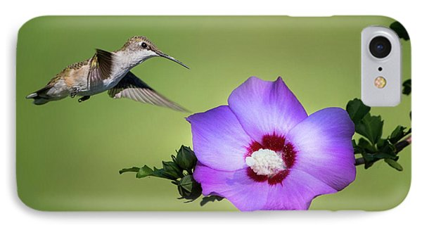 Hummingbird Elegance Square IPhone Case by Bill Wakeley
