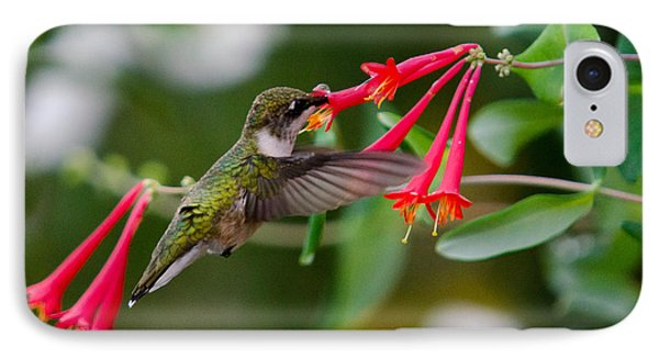 IPhone Case featuring the photograph Hummingbird Feeding by Gary Wightman