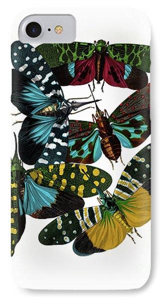 Hummingbird Hawk Moths, Vintage Etomology Illustration IPhone Case by Tina Lavoie