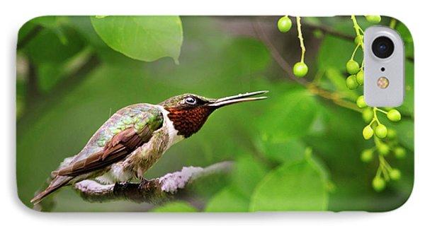 Hummingbird Hiding In Tree Phone Case by Christina Rollo