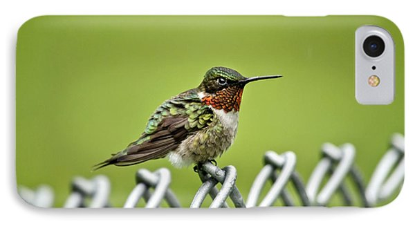 Hummingbird On A Fence Phone Case by Christina Rollo