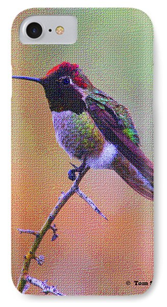 Hummingbird On A Stick IPhone Case by Tom Janca