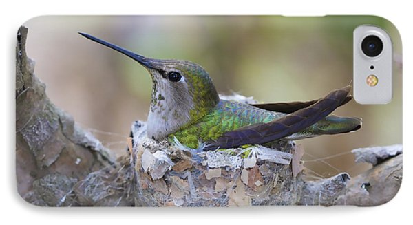 Hummingbird On Nest IPhone Case