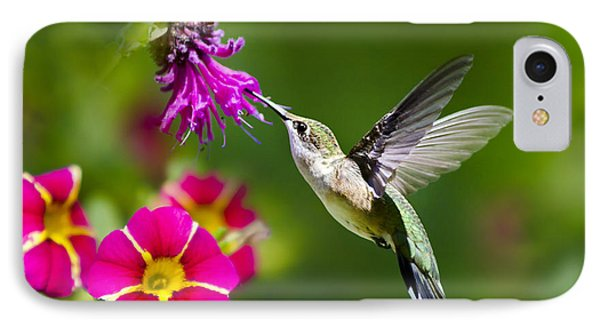 Hummingbird With Flower IPhone Case by Christina Rollo