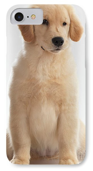 Humorous Photo Of Golden Retriever Puppy Phone Case by Oleksiy Maksymenko