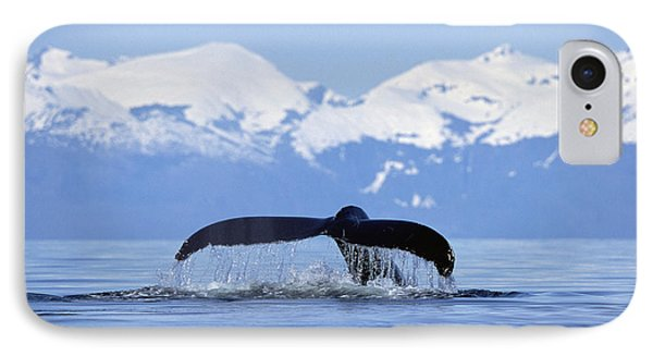 Humpback Whale Megaptera Novaeangliae IPhone Case