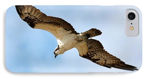 Hunter Osprey IPhone Case by Carol Groenen