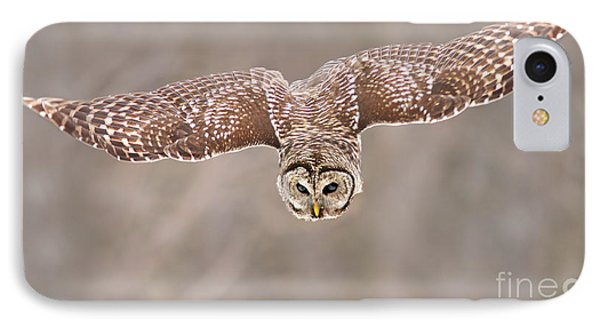 Hunting Barred Owl  IPhone Case by Mircea Costina Photography