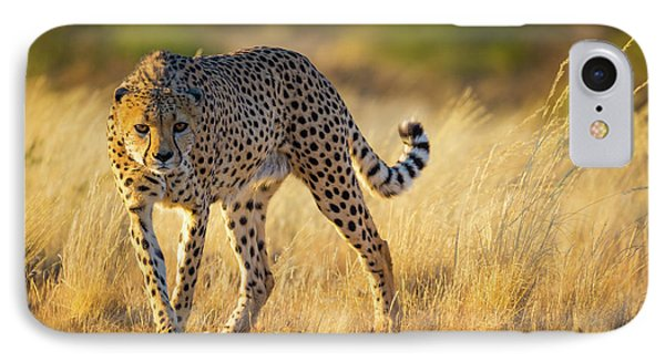 Hunting Cheetah IPhone Case by Inge Johnsson