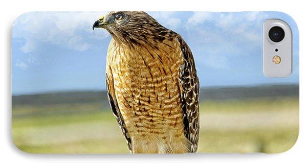 Hunting Hawk IPhone Case by Susan Leggett