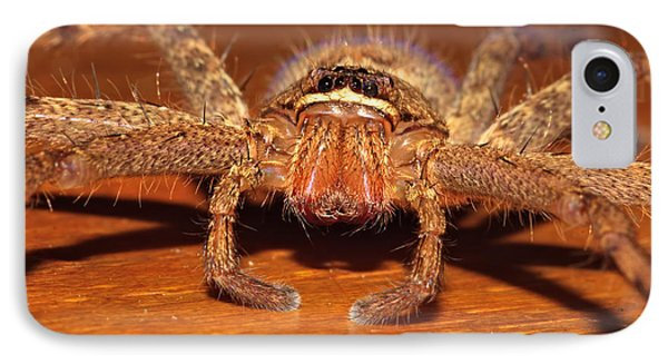 Huntsman Spider IPhone Case