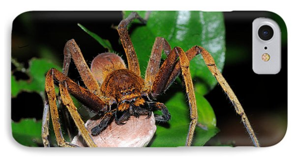 Huntsman Spider With Egg Sac IPhone Case by Fletcher & Baylis