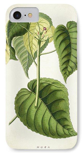 Hura Botanical Print IPhone Case by Aged Pixel