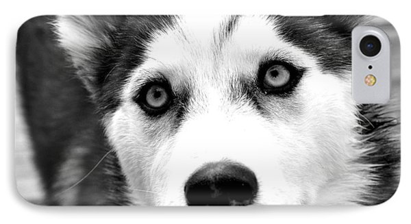 Husky Pup IPhone Case by Sumit Mehndiratta
