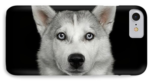 Husky Puppy IPhone Case