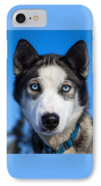 Husky Stare IPhone Case by Billy Soden