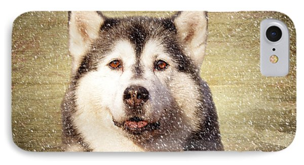 Husky IPhone Case by Nichola Denny
