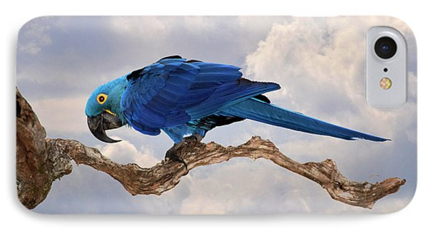 Hyacinth Macaw IPhone Case by Wade Aiken