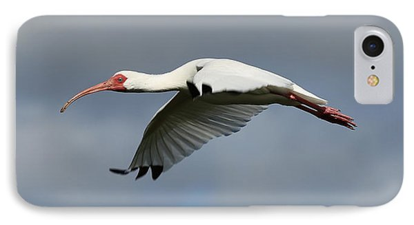 Ibis In Flight IPhone Case by Carol Groenen