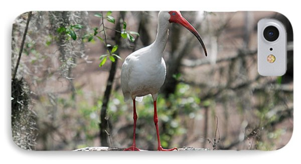 IPhone Case featuring the photograph Ibis  by Teresa Blanton