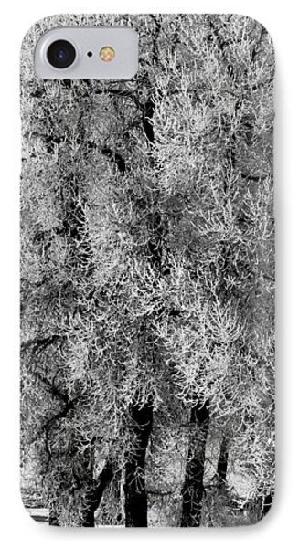 Iced Cottonwoods IPhone Case by Colleen Coccia
