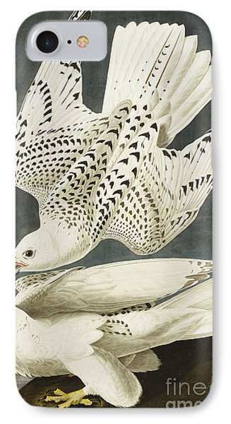 Iceland Or Jer Falcon IPhone Case by John James Audubon