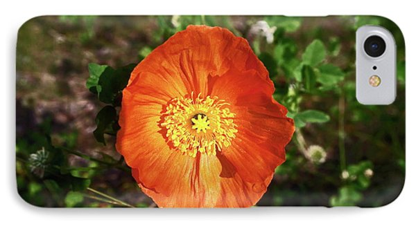 Iceland Poppy IPhone Case by Sally Weigand