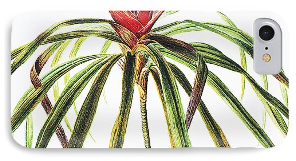 Ieie Plant IPhone Case by Hawaiian Legacy Archive - Printscapes