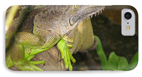 Iguana - A Special Garden Guest IPhone Case by Christiane Schulze Art And Photography