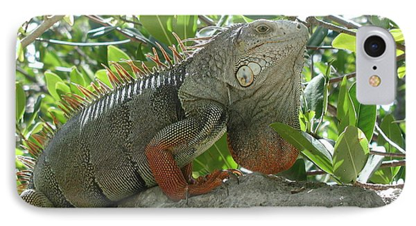Iguana Daze IPhone Case by Nancy Taylor