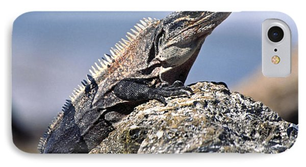 IPhone Case featuring the photograph Iguana by Sally Weigand