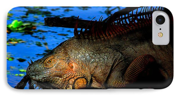 Iguana Sunrise IPhone Case by Mark Andrew Thomas