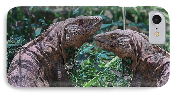 Iguanas  IPhone Case by Betsy Knapp