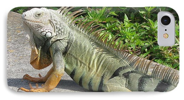 IPhone Case featuring the photograph Iguania Sunbathing by Christiane Schulze Art And Photography