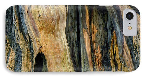Illuminated Stump 03 IPhone Case by Bruce Gourley