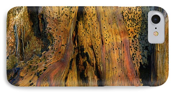 Illuminated Stump With Peeking Crab IPhone Case by Bruce Gourley