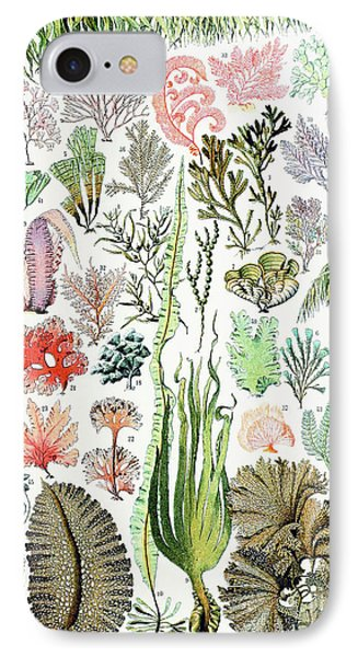 Illustration Of Algae And Seaweed  IPhone Case by Adolphe Philippe Millot