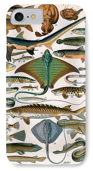 Illustration Of Ocean Fish IPhone Case by Alillot