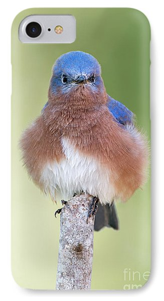 IPhone Case featuring the photograph I May Be Fluffy But I'm No Powder Puff by Bonnie Barry