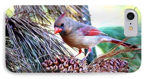 Img_0311 - Northern Cardinal IPhone Case