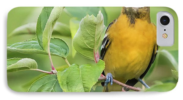Immature Baltimore Oriole  IPhone Case