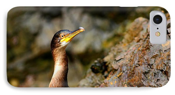 IPhone Case featuring the photograph Immature Shag by Richard Patmore