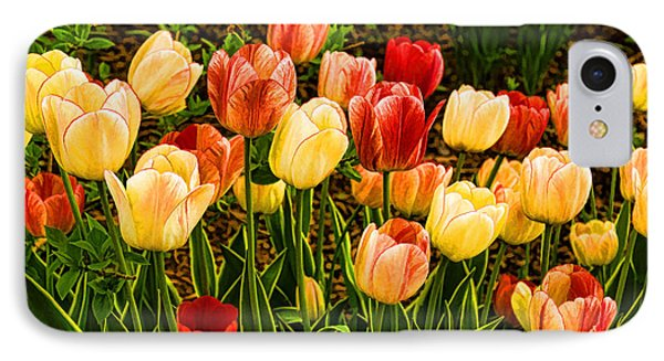 Impressions Of Gardens - Particolored Vernal Tulips IPhone Case