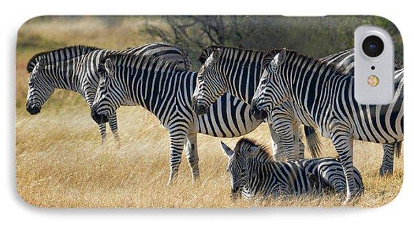 In Line Zebras IPhone Case by Joe Bonita