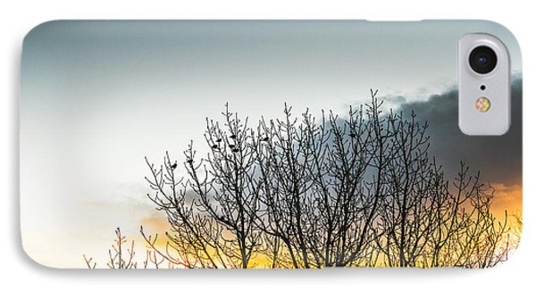 In Silhouette Of Birds And Twigs IPhone Case