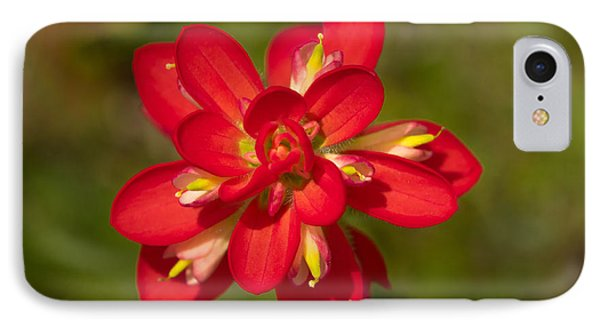 Indian Paintbrush IPhone Case by John Roberts