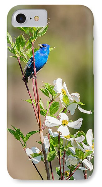 Indigo Bunting In Flowering Dogwood IPhone Case by Bill Wakeley