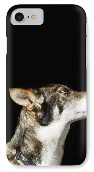 Indoor Close Up Portrait Of Iditarod IPhone Case by Ann Matchett